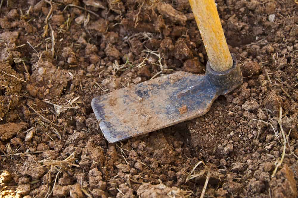 Check The Different Features Properly While Buying The Best Hoe Tool For Your Garden